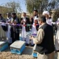 images__stories__helmand_honey-1